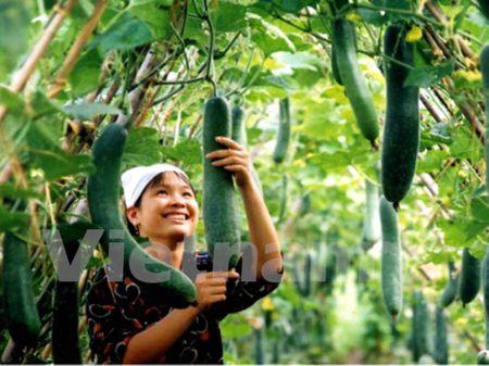 Rau qua Viet: Diem sang an tuong tren buc tranh xuat khau nong san - Anh 1
