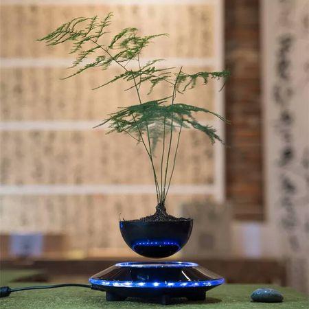 "Cay trong chau xua roi, Tet nam nay moi nguoi ""choi"" bonsai bay - Anh 10"