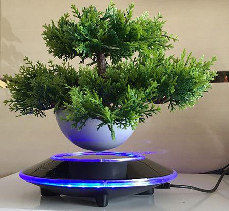 "Cay trong chau xua roi, Tet nam nay moi nguoi ""choi"" bonsai bay - Anh 12"