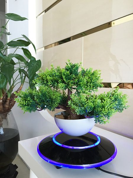 "Cay trong chau xua roi, Tet nam nay moi nguoi ""choi"" bonsai bay - Anh 13"