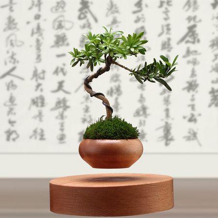 "Cay trong chau xua roi, Tet nam nay moi nguoi ""choi"" bonsai bay - Anh 4"