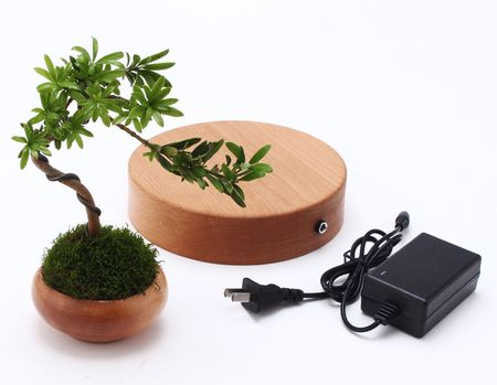 "Cay trong chau xua roi, Tet nam nay moi nguoi ""choi"" bonsai bay - Anh 5"