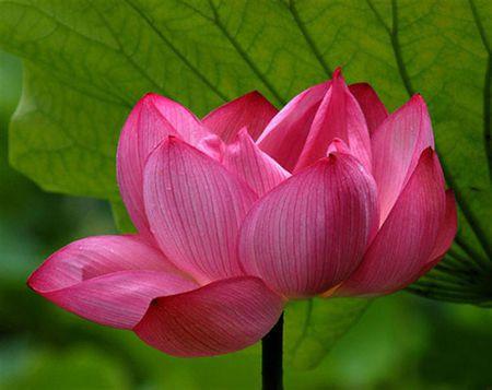 'Chap tay hoa' - Than lay hay tam lay - Anh 1
