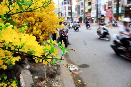 Hoa vai cao cap gia hon chuc trieu 'chay hang' o TP.HCM - Anh 4