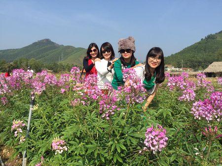 Lac buoc toi 'thien duong hoa Quang La' moi toanh o Quang Ninh - Anh 2