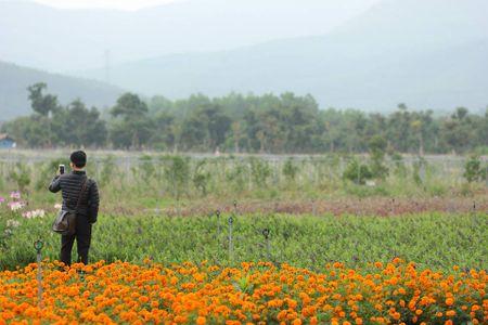 Lac buoc toi 'thien duong hoa Quang La' moi toanh o Quang Ninh - Anh 3