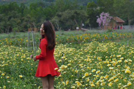 Lac buoc toi 'thien duong hoa Quang La' moi toanh o Quang Ninh - Anh 4