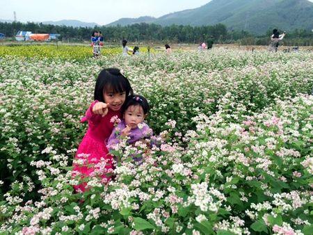 Lac buoc toi 'thien duong hoa Quang La' moi toanh o Quang Ninh - Anh 6