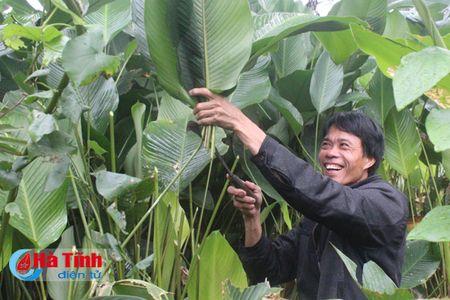 Lang la dong Vinh Phuc tat bat phuc vu Tet - Anh 1