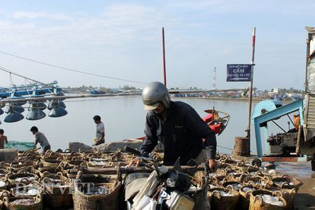 Ninh Thuan: Ra khoi dau nam, ngu dan phan khoi trung gia ca com - Anh 4