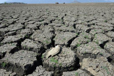 He lo su that kinh hoang ve hien tuong El Nino - Anh 5