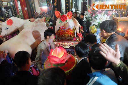 An tuong le ruoc 17 'ong Lon' nang 300kg o Ha Noi - Anh 1