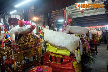 An tuong le ruoc 17 'ong Lon' nang 300kg o Ha Noi - Anh 2