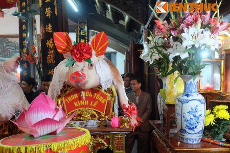An tuong le ruoc 17 'ong Lon' nang 300kg o Ha Noi - Anh 3