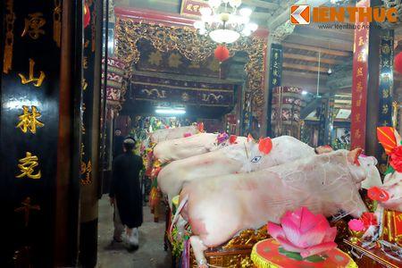 An tuong le ruoc 17 'ong Lon' nang 300kg o Ha Noi - Anh 5