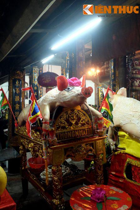 An tuong le ruoc 17 'ong Lon' nang 300kg o Ha Noi - Anh 6