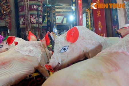An tuong le ruoc 17 'ong Lon' nang 300kg o Ha Noi - Anh 7