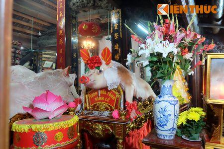 An tuong le ruoc 17 'ong Lon' nang 300kg o Ha Noi - Anh 8