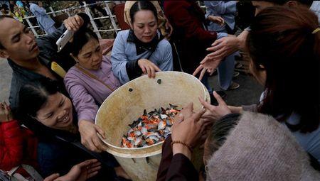 Khong nen phong sinh sinh vat ngoai lai - Anh 1
