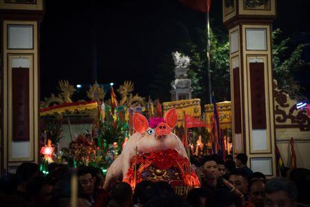 Nguoi dan La Phu tung bung ruoc 'Ong lon' 200kg trong dem - Anh 16