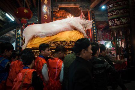 Nguoi dan La Phu tung bung ruoc 'Ong lon' 200kg trong dem - Anh 18