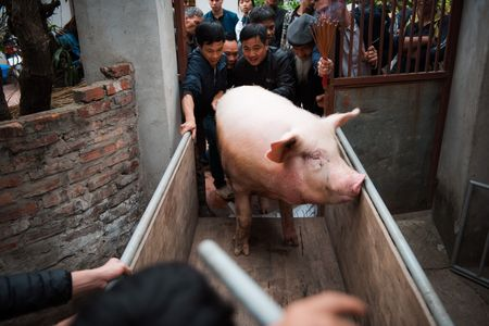 Nguoi dan La Phu tung bung ruoc 'Ong lon' 200kg trong dem - Anh 3