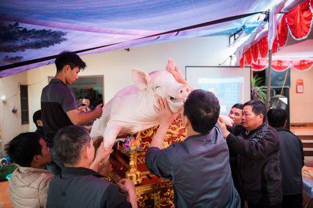 Nguoi dan La Phu tung bung ruoc 'Ong lon' 200kg trong dem - Anh 7