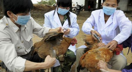 Bo Y te ra cong van khan khi dich cum H7N9 tien sat Viet Nam - Anh 1