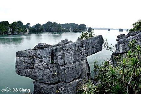 Cac ngoi sao cua phim 'Kong: Skull Island' noi gi ve Vinh Ha Long? - Anh 6