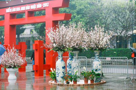 Nguoi dan doi mua di xem Le hoi hoa anh dao Nhat Ban - Anh 1