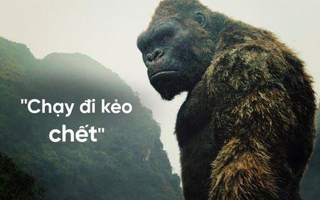 Kong - Vi vua khong ngai va man trinh dien 'buon ngu' cua Tom Hiddlestone tren Dao Dau Lau - Anh 1