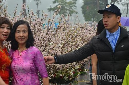 Le hoi hoa anh dao Ha Noi: Nhieu loi khen nhung khong it tieng che - Anh 10