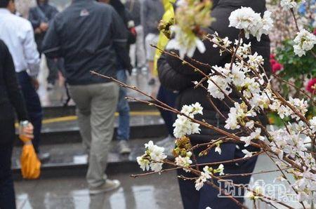 Le hoi hoa anh dao Ha Noi: Nhieu loi khen nhung khong it tieng che - Anh 11