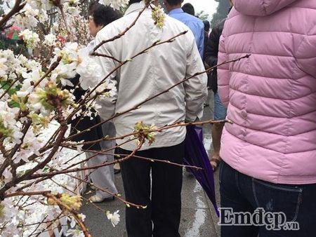 Le hoi hoa anh dao Ha Noi: Nhieu loi khen nhung khong it tieng che - Anh 12