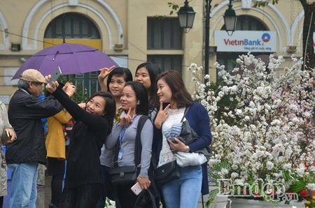 Le hoi hoa anh dao Ha Noi: Nhieu loi khen nhung khong it tieng che - Anh 1