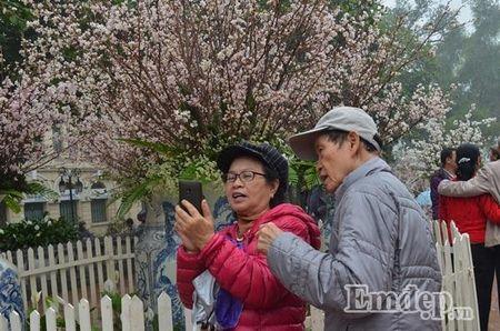 Le hoi hoa anh dao Ha Noi: Nhieu loi khen nhung khong it tieng che - Anh 3