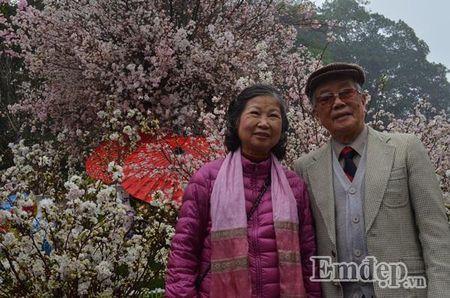 Le hoi hoa anh dao Ha Noi: Nhieu loi khen nhung khong it tieng che - Anh 4