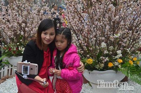 Le hoi hoa anh dao Ha Noi: Nhieu loi khen nhung khong it tieng che - Anh 5