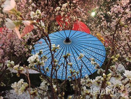 Le hoi hoa anh dao Ha Noi: Nhieu loi khen nhung khong it tieng che - Anh 9