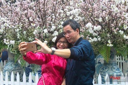 100% hoa 'xin' tai Le hoi hoa anh dao khong lam du khach that vong - Anh 14