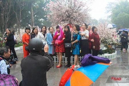 100% hoa 'xin' tai Le hoi hoa anh dao khong lam du khach that vong - Anh 15