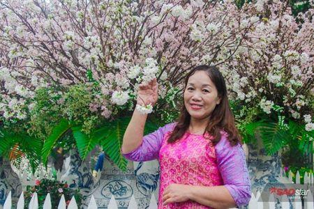 100% hoa 'xin' tai Le hoi hoa anh dao khong lam du khach that vong - Anh 6