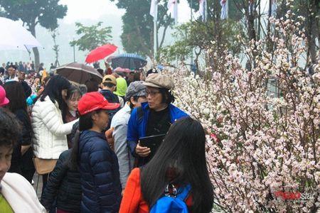 100% hoa 'xin' tai Le hoi hoa anh dao khong lam du khach that vong - Anh 8