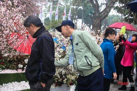 100% hoa 'xin' tai Le hoi hoa anh dao khong lam du khach that vong - Anh 9
