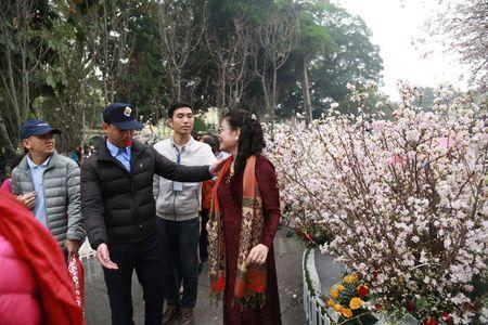 Chen chan ngam hoa anh dao duoi troi mua phun - Anh 12