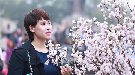 Chen chan ngam hoa anh dao duoi troi mua phun - Anh 1