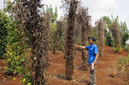 Can xoa bo rao can trong thu tuc dau tu vao cac tinh Tay Nguyen - Anh 1