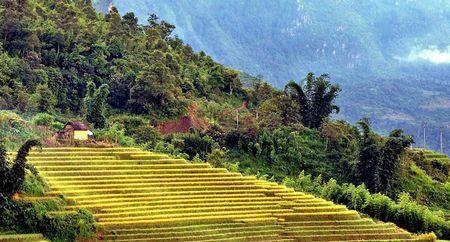 Ngam 'buc tranh' day mau sac o Ngai Thau - Anh 14