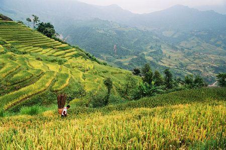 Ngam 'buc tranh' day mau sac o Ngai Thau - Anh 16
