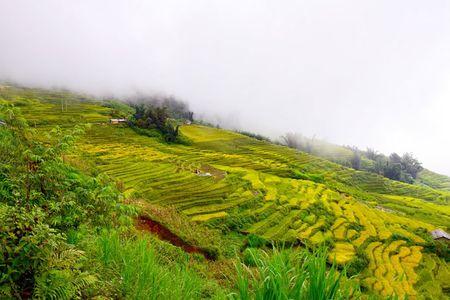 Ngam 'buc tranh' day mau sac o Ngai Thau - Anh 4